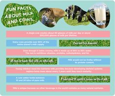 Fun facts about milk and cows #2013JuneDairyMonth #CelebrateDairy