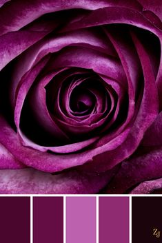 Shop Beautiful Purple Rose Flower Petals Girly Gifts Postage created by PrettyPatternsGifts. Personalize it with photos & text or purchase as is! Dark Purple Roses, Deep Purple, Plum Purple, Purple Art, Red Roses, Pink Flowers, Rose Violette, Flower Shower Curtain, Caran D'ache