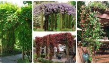 15 Best Climbing Plants for Pergolas and Arbors