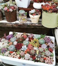 Succulent filled sink