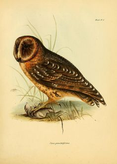 n62_w1150 by BioDivLibrary, via Flickr