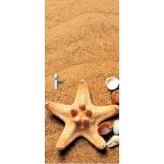 Deursticker Zeester | Een deursticker is precies wat zo'n saaie deur nodig heeft! YouPri biedt deurstickers zowel mat als glanzend aan en ze zijn allemaal weerbestendig! Verkrijgbaar in verschillende afmetingen.   #deurstickers #deursticker #sticker #stickers #interieur #interieurprint #interieurdesign #foto #afbeelding #design #diy #weerbestendig #strand #zand #schelpen #zeester #schelpjes