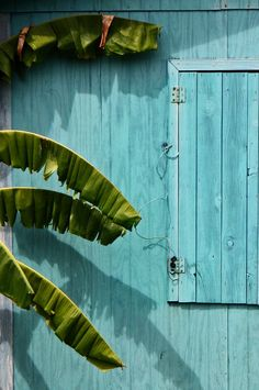 Blue house and banana tree .Newer Older Providencia island, Colombia- so maybe my idea of the aqua/turquoise color will work with the dark green. Bleu Turquoise, Turquoise Walls, Turquoise Jewelry, Tropical Vibes, Tropical Colors, Tropical Paradise, Paradise Travel, Summer Colours, Tropical Houses