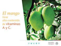 El mango tiene alto contenido de vitaminas A y C.  SAGARPA SAGARPAMX