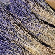 Dried lavender holds fragrance and is more aromatic when warm.