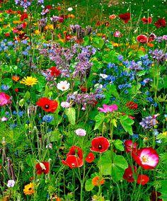 Kollektion av vilda blommor blandade färger