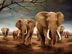 3D Lenticular Poster Elephant