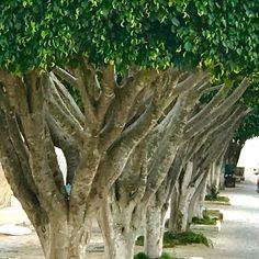 Jaguaquara onde cada árvore conta uma história.