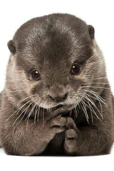 BEAUTIFUL AND CUTE OTTER!