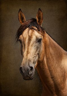 A Classic Horse Portrait Using Textures