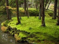 Moss Garden Keishun In Temple Kyoto Japan Asia: Bog Plant Of The Month – Sphagnum Moss Moss Temple, Japanese Course, Bog Plants, Japan Garden, Kyoto Garden, Forest Garden, Forest Landscape, Garden Paths, Kyoto Japan