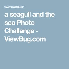 a seagull and the sea Photo Challenge - ViewBug.com