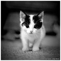 Animal Photography Black and White Kitten