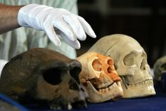 Latest excavations show Homo floresiensis to be tens of thousands of years older than thought.