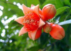 """Hoy te invitamos a degustar nuestra infusión """"LA FRUTA PROHIBIDA"""" con Flores de granada, breva, dátil, jengibre, membrillo, pétalos de rosa, melisa, mora, ortiga, hojas de cáñamo, regaliz, rosa, arándanos y ginseng. Entra en http://www.namaste-guadalajara.com/mezclas-frutales/104-la-fruta-prohibida-.html y descubre nuestras más de cien variedades de té, rooibos, infusiones y café, ven a conocernos en la C/ San Roque 17 – 19002 – Guadalajara – España y te invitaremos a degustar nuestro té"""