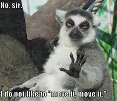 "You have to have seen the animated movie ""Madagascar"" to get this joke. The lemur says talk to the hand!"