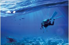 Learning to dive opens up a whole new world to explore in Oman, where colourful adventures await just off the coast. Fishing Life, A Whole New World, Red Sea, Adventure Awaits, Scuba Diving, Middle East, Coast, Explore, Lifestyle