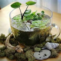 indoor mini pond....