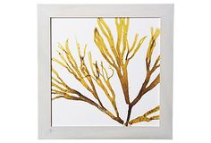 Modern Seaweeds VI on OneKingsLane.com