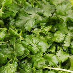 How To Grow Coriander? Tips and Tricks – Plantui Growing Coriander, Smart Garden, Planting Seeds, Growing Plants, Herbs, Tips, Seed Starting, Herb, Counseling