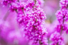 Purple flowers by marbee .info, via 500px