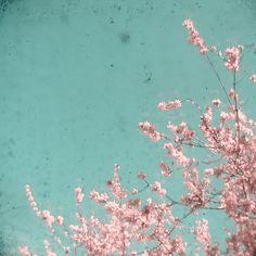Poster | SPRING DREAM von Cassia Beck Check more at http://moreposter.de/poster-spring-dream-von-cassia-beck/
