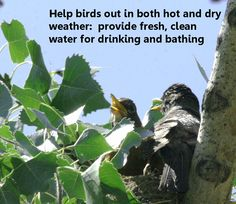 SeEtta's got some suggestions for keeping birds healthy during hot weather over on our blog.