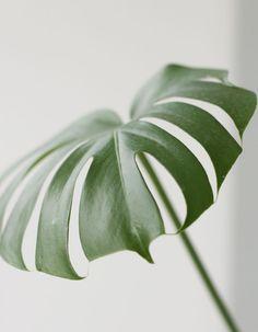 Urban Jungle Bloggers: Botanical Zoom by @Ricarda | 23QM Stil