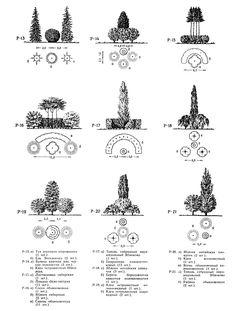Ландшафтные группы из кустарников и деревьев