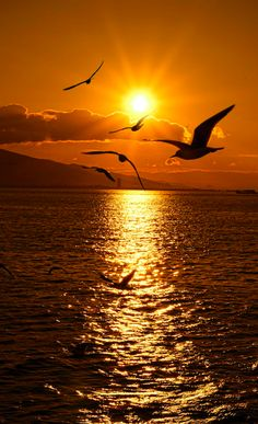 Seagull sunset in Izmir on Turkey's Aegean Sea coast • photo: Emre KAYA on 500px