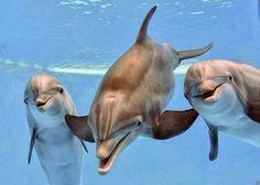 Trio di delfini