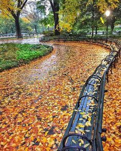 """""""When it rains it pours leaves  """" #newyorkcity #newyork #nyc #nycfall #fall #centralpark @centralparknyc #benches"""