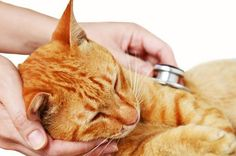 Cats Deserve Better, Cat Friendlier Attitudes in 2015