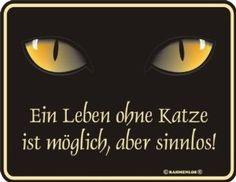Blech-Schild Spruch Ein Leben ohne Katze: Amazon.de: Küche  Haushalt