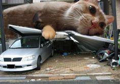 """Cat""""zilla"""""""