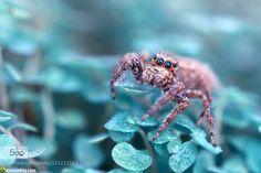 Deep Blue by AimishBoy. Please Like http://fb.me/go4photos and Follow @go4fotos Thank You. :-)