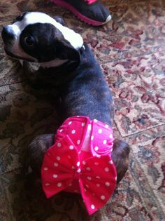 OMG I need some doggie props!!!  Female Dog Diaper / Panties  Hot Pink with White by CodysHaven, $10.00