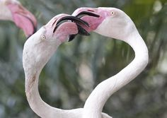"""Flamingo Fight 