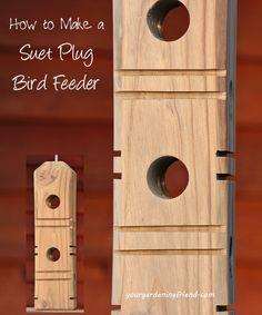 suet plug feeder