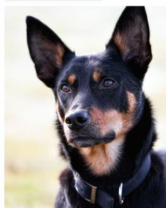 this lil Kelpie reminds me of someone special