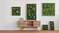 Kugelmoos trifft Waldmoos Die styleGREEN Moosbilder, komponiert aus den kräftigen Grüntönen der Moose und gerahmt wie ein kunstvolles Gemälde, setzen Ihre Wände neu in Szene. Mal erheben sich saftig-frische Polstermoose kugelförmig...