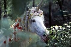 robert vavra unicorns i have known - Yahoo Image Search results