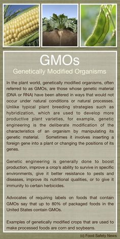 Genetically Modified Organisms (GMOs) in our food- we need labelling!