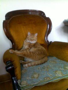 Mr. O on his Royal Chair