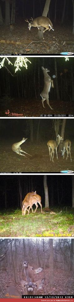 Let's All Take A Moment To Appreciate The Majestic Trail Camera Deer