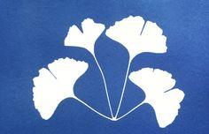 © Heather Angel – 1995 cyanotype or blue print of maidenhair tree leaves, Ginkgo biloba.