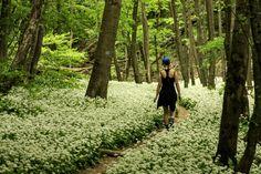 Index - Kultúr - Illatos szabadidős célú gyaloglások a Burok-völgyben és máshol Hungary, Traveling, Bucket, Country Roads, Places, Nature, Bahia, Culture, Viajes