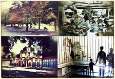 CR: Modena n. 8 (I giardini)