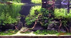 Aquarium Aquascape, Aquascaping, Planted Aquarium, Nature Aquarium, Aquarium Design, Fish Room, Drawing Stuff, Fish Tank, Terrarium