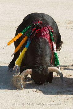Image result for marie sara corrida